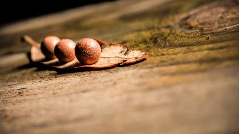 Three Tree Nuts